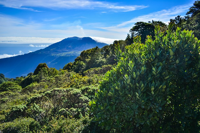 Le trésor vert du Costa Rica